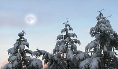 Three Kings Under a Winter Moon (rgdaniel) Tags: trees winter moon snow photoshop interestingness379 i500