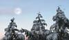 Three Kings Under a Winter Moon (rgdaniel) Tags: trees winter moon snow photoshop interestingness379 i500