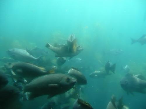 submarine view in catalina.