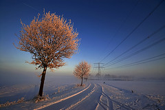 winter lines (Jan Linskens) Tags: winter sunset snow cold landscape sneeuw venray breathtaking landschap kou lijnen fiatlux photoqueen supershot zarafa specialtouch specialpicture aplusphoto colourartaward flickrslegend merselo spiritofphotography janlinskens breathtakinggoldaward fotoclubvenray vosplusbellesphotos goldenart flickraward superstarthebest goldendiamondblog magicunicornverybest sailsevenseas sailsevenseasmaster breathtakinghalloffame