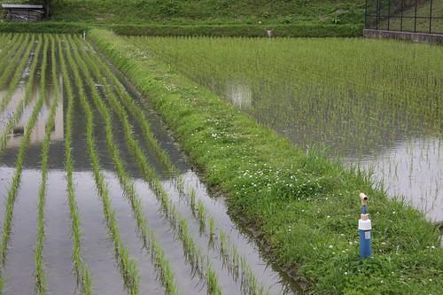 Rice-planting began.
