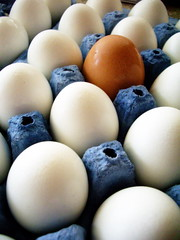 conspegguous (Az~Kate) Tags: brown white contrast eggs mywinners noncomformist