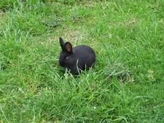 Bunny at DHSI 2008