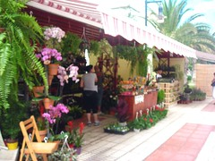 Plant and flower show