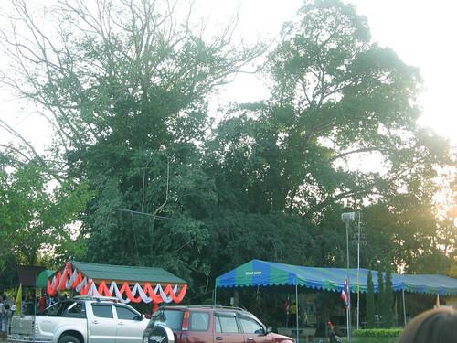 Church - Believe it or Not ! โบสถในต้นไม้