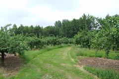 Priory Farm Discovery Walk #18