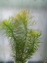 Thủy Sinh Tuấn Anh-Chuyên cây & Rêu Thủy Sinh, Cá Cảnh Biền & Hồ Cá Cảnh Biển - 28