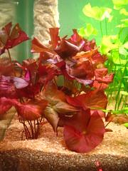 Thủy Sinh Tuấn Anh-Chuyên cây & Rêu Thủy Sinh, Cá Cảnh Biền & Hồ Cá Cảnh Biển - 2