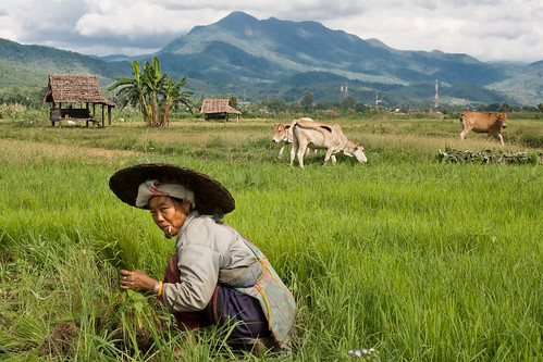 Woman farming in Mae Sariang
