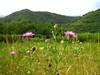 fiori sul monte quarin