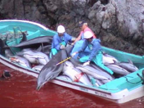 dolphin-sl-03