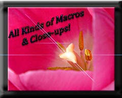 ALL KINDS OF MACROS & CLOSE-UPS