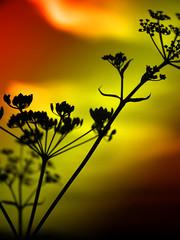 David says there's life on Mars (Jerome Mercier) Tags: leica light orange plant flower colour nature yellow clouds jaune sunrise lumière ky atmosphere vert ciel fv10 psychedelic nuage couleur leicadigilux3 colorphotoaward aplusphoto frhwofavs platinumheartaward jeromemercier 100commentgroup jeromemercierphoto jmbook bookjm