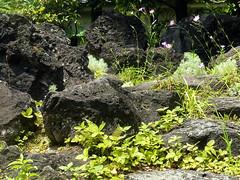 Lava stones // Himeji - Koko-en garden