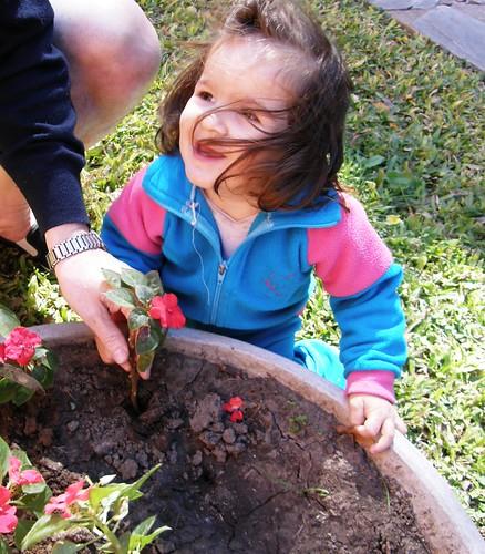 plantando alegrias 2