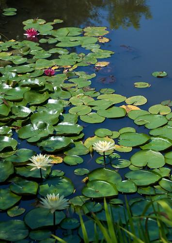 Monet Garden 02