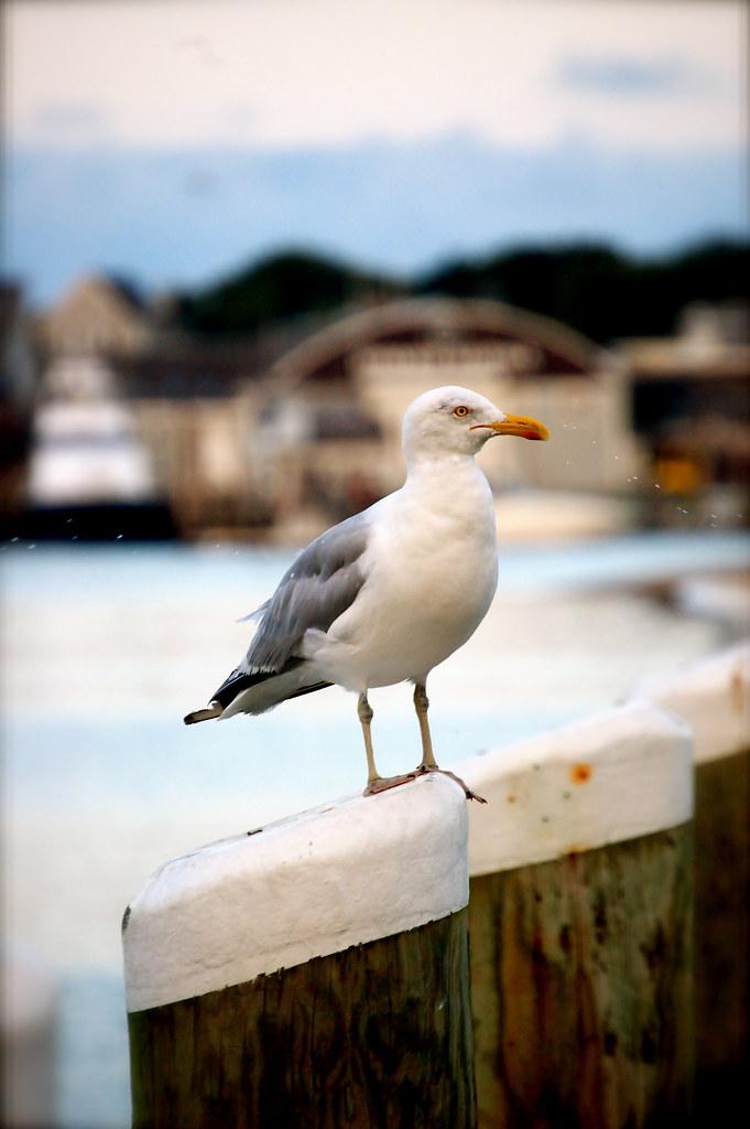 Here birdy birdy!