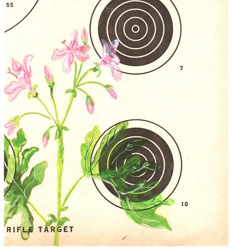 coagulant rifle target :: pink geraniums