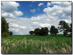 Back to Summer (Lisa-S) Tags: blue trees sky ontario canada green field clouds rural canon landscape lisas explore allrightsreserved 1154 cookstown interestingness310 i500 s3is canons3is hwy27 copyrightlisastokes