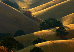 undulating terrain (Marc Crumpler (Ilikethenight)) Tags: california trees sunset usa canon landscape hiking trails hills bayarea eastbay antioch blackdiamond ebrpd naturesfinest contracostacounty eastbayregionalparkdistrict interestingness320 i500 canon70300isusm sfchronicle96hours 40d ebparks canon40d betterthangood explore12sept08 ilikethenight marccrumpler ebparksok