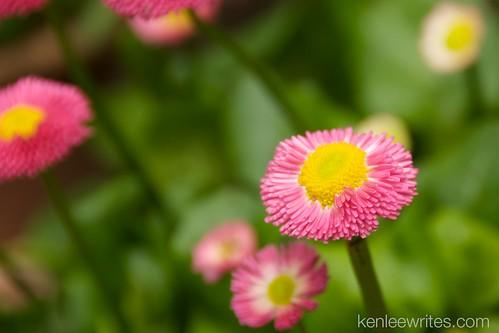 Ofuna Botannical Gardens  011