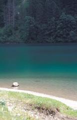 lago di tovel (zecaruso) Tags: italy lake lago italia trento caruso non cles trentino ciccio nikonf601 tovel zecaruso cicciocaruso