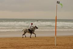 Polo on the Beach (nick3216) Tags: uk horses beach caballo cheval watergatebay cornwall unitedkingdom surfer cal pferde cavallo cavalo polo hest hevonen paard  hst  ko chukka beachpolo