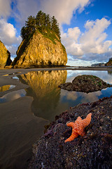 Canon Photography in the Parks Photo Contest (KPieper) Tags: ocean sunrise rocks starfish olympicpeninsula vote secondbeach finalist onp aplusphoto kpieper canonintheparks