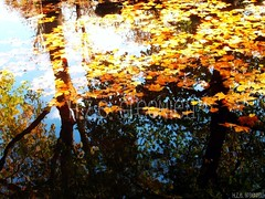 Fall and Drown (greenie11*) Tags: voyage trip travel autumn trees sky orange paris france reflection tree leave water girl leaves yellow mirror bomen travels frankreich eau wasser europa europe place emotion spiegel herbst herfst reis places boom blad arbres list hana feeling frankrijk moment amateur geel arbre strom francie parijs tak voda oranje takken podzim reizen reflectie tranche blaadje evropa bladeren stromy zrcadlo odraz tranches list pariz oranzova cestovat zluta greenie11