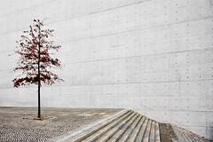 Slightly red (96dpi) Tags: autumn tree berlin architecture concrete stair herbst steps parliament treppe architektur minimalism regierung baum beton stufen paullbehaus regierungsviertel sichtbeton spreebogen parlamant