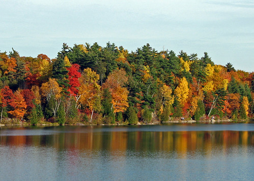 Fall Colours along Shore of Pink Lake