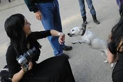 _WTT1288 (susanjoly) Tags: paris france dogs stars theatre crazies playacting parcmanceau