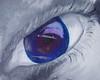 Her Eyes (Lady Annabella) Tags: eye humaneye hereyes womanseye