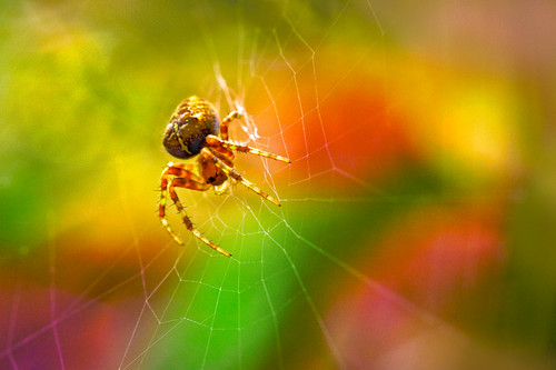 Bokeh & The Spider