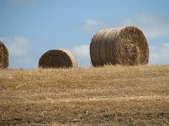 Hay-making (Heart felt) Tags: newzealand sky rural farming farms hay bales stacks taranaki haymaking ilobsterit