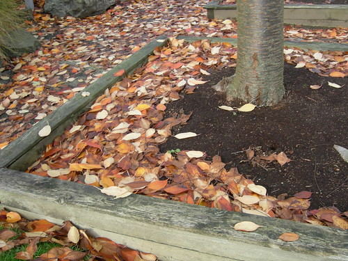 Cherry tree planter box with mulch