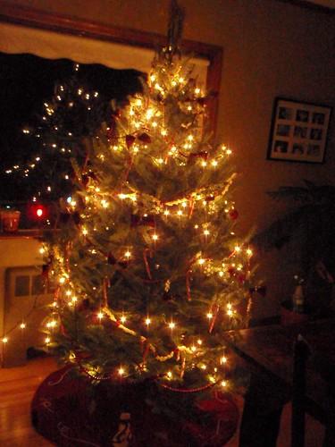 Steve's Tree
