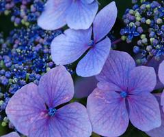 Look What Blue in My Garden!