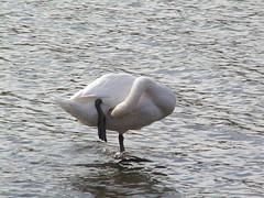 griggs 025 (MeRyan) Tags: nature public birds rivers