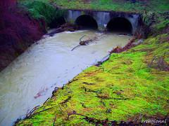 il rio in piena (archgionni) Tags: bridge italy nature water rain italia natura ponte piemonte acqua distillery pioggia fineartphotos