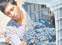 El vino casero como una respuesta a la crisis del 2001