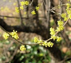 blossom_2008