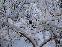 Zima za oknem