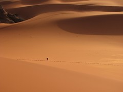 Following the path (Melville B.) Tags: africa sahara algeria sand desert dune sable explore getty footsteps algerie algrie gettyimages 50faves tadrart powershots3is s3is bestofr tinmerzouga melvilleb