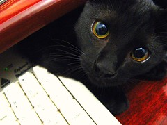 love me tender... (Marenrique) Tags: macro cat kitten keyboard teclado kitty gato filhote gatinho pedinte gatodebotas needyeyes