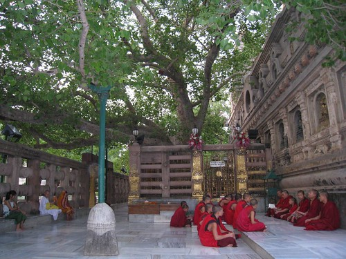 Monks meditate under the Bodhi Tree