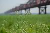 Hardinge bridge bokeh (nurur) Tags: bridge river bokeh railway bangladesh padma hardinge platinumphoto ishwardi hardingebridge