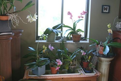 orchidsinsitu