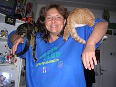 DSCN2865 (delilah84) Tags: cats animals chat felini animaux gatti animali gatte chattes