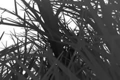 (lennyjpg) Tags: tree children opengl 3d closed branch mesh random geometry spin grow roots lenny structure generative processing recursive complexity noise shape computational gpu density processingorg vertices lennyjpg leanderherzog displaylist soldid wwwleanderherzogch